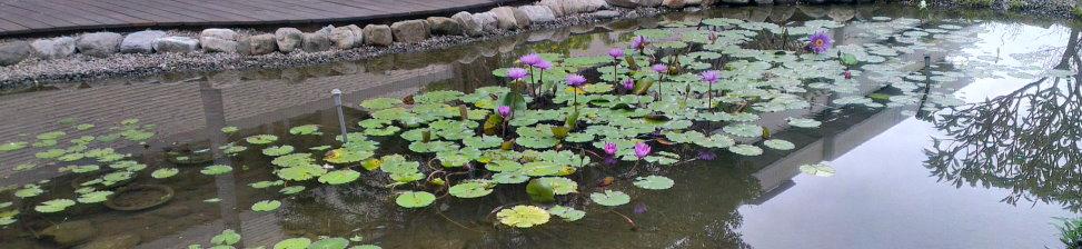 綠化生態池